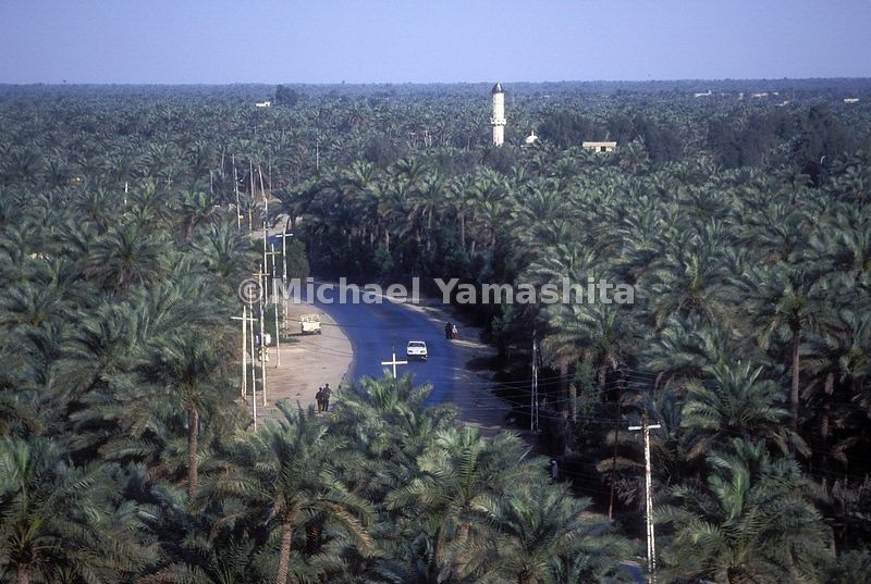 An aerial view of the Basra Palm tree plantations.