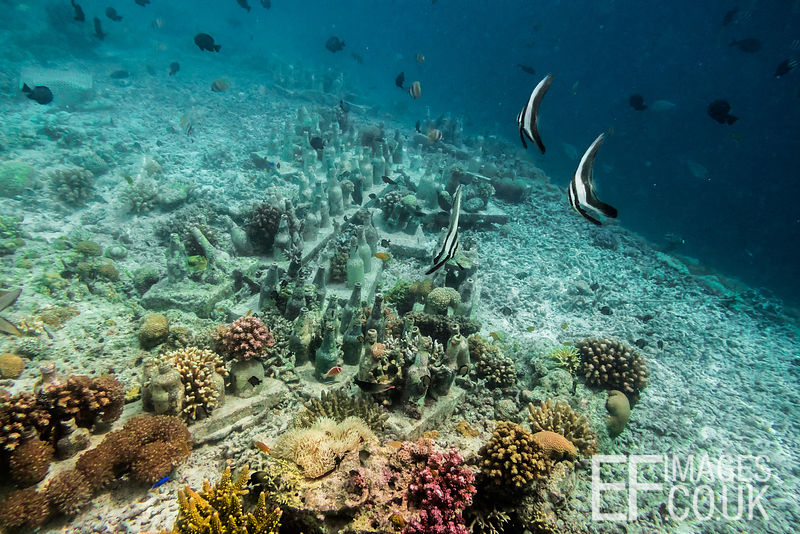 TRACC has created a 400m long artificial reef at its conservation camp, by rescuing coral shattered by bomb fishing and repla...