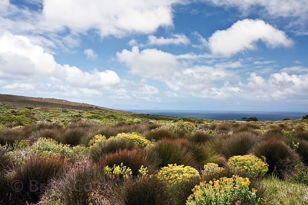 Fynbos near Buffels Bay, Cape Peninsula, South Africa