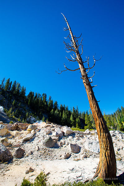 DEAD TREE DEVILS KITCHEN LASSEN VOLCANIC NATIONAL PARK CALIFORNIA