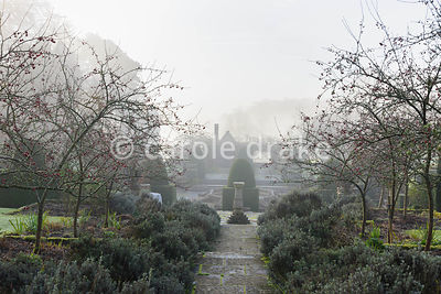 Lavender and crab apples frame the central path through the Fountain Court in winter at Mapperton, Dorset