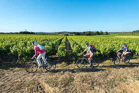 photo: randonnee velo vignoble