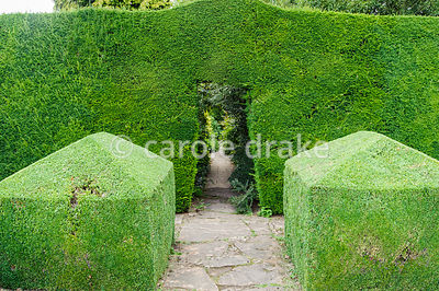 Yew hedge dividing Leisure Garden from Herbaceous Borders with box cubes marking the opening. Rodmarton Manor, Rodmarton, Tet...