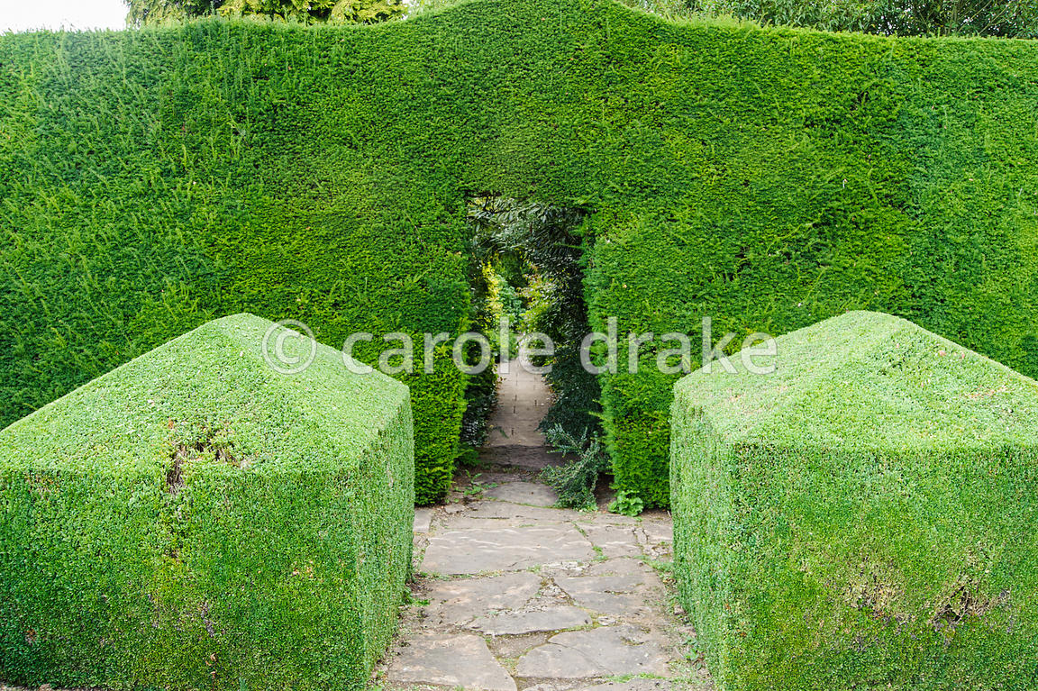 Yew hedge dividing Leisure Garden from Herbaceous Borders with box cubes marking the opening. Rodmarton Manor, Rodmarton, Tetbury, Glos, UK