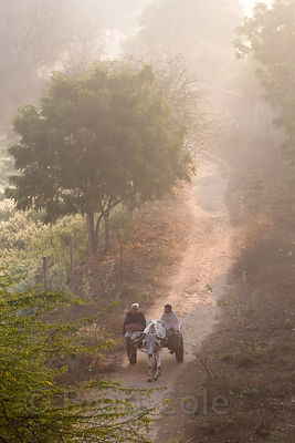 Farming couple drive their ox cart down a country lane at sunrise, Saradhana, Ajmer, Rajasthan, India. Seen from a nearby mou...