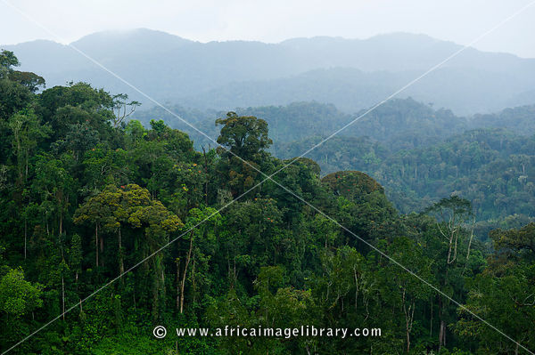 View over the canopy, Nyungwe Forest National Park, Rwanda