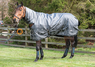 a bay horse wearing a grey rug - royalty free image