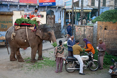 Elephant at a market in Jodhpur, Rajasthan, India