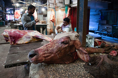 A severed cows head at a slaughterhouse, Newmarket, Kolkata, India. The cow is sacred to Hindus, but India is not all Hindus.