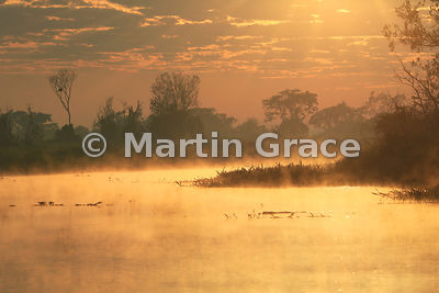 Spectacular golden Pantanal sunrise with single Yacaré Caiman (Caiman yacare) and mist rising off the River Cuiabá, Mato Gros...