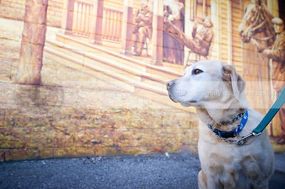 yellow lab dog sitting on asphalt in front of urban mural