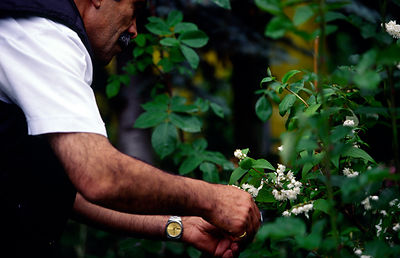 A refugee prunes a bush in the gardens