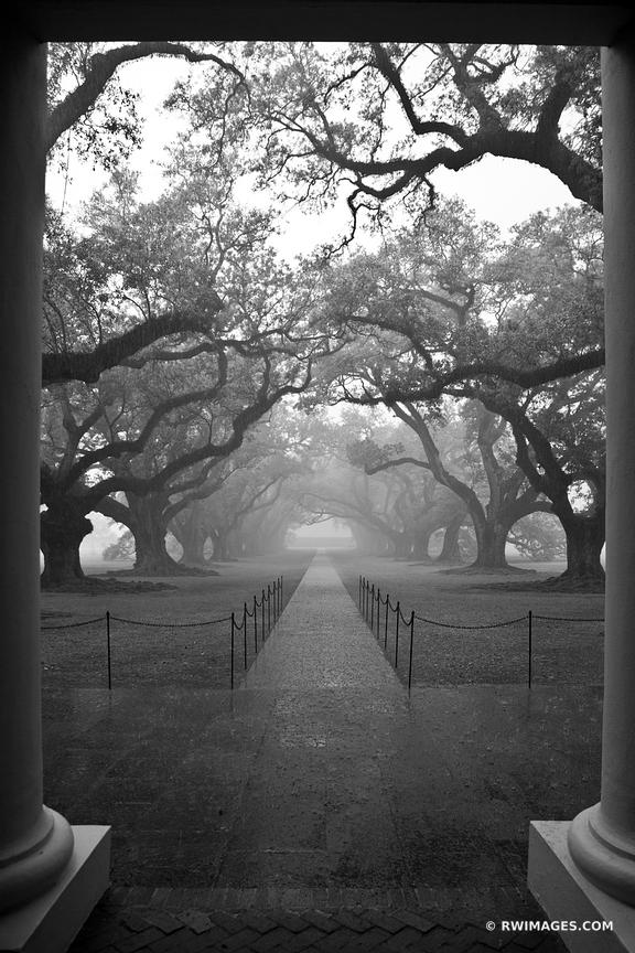 OAK ALLEY PLANTATION RAINY DAY BLACK AND WHITE VERTICAL