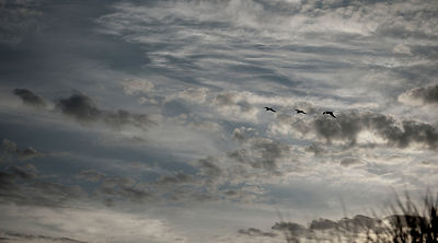 Seagulls in the sky #1