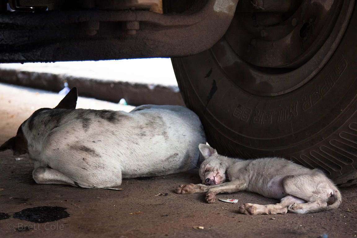 A stray dog mother and puppy sleep under a car in Sovabazar, Kolkata, India.