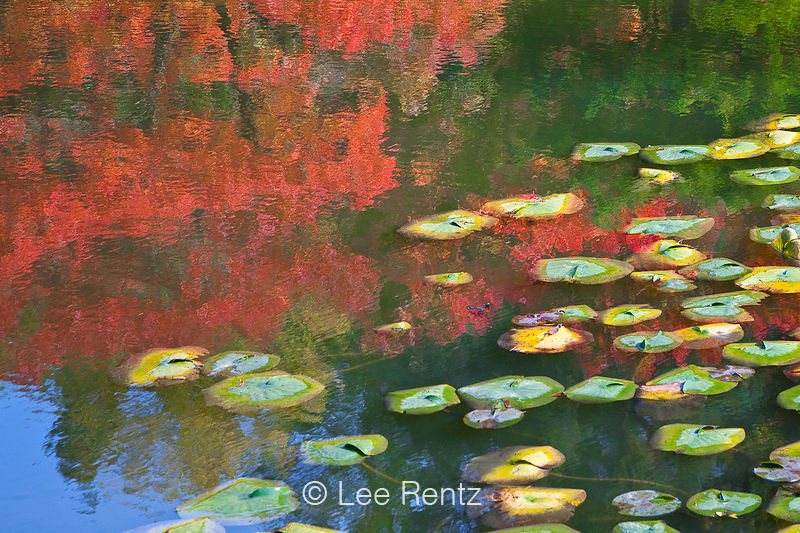 HOMAGE TO MONET 5: Impressions in a Japanese Garden