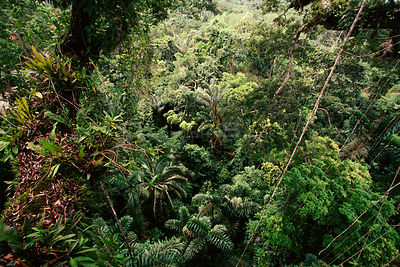 Tropical rainforest midstorey viewed from canopy Rio Napo Ecuador