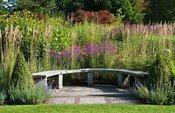 Curved wooden seat backed by grasses and flowering perennials including Lythrum virgatum 'Dropmore Puprle' along the main bor...