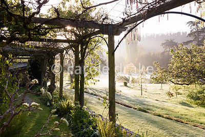 A pergola along one side of the Tunnel Garden at Heale House, Middle Woodford, Wiltshire festooned with vines and wisteria on a frosty April morning