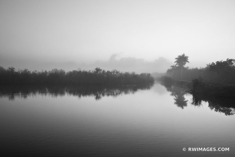 MISTY MORNING ROYAL PALM EVERGLADES NATIONAL PARK FLORIDA BLACK AND WHITE ANHINGA TRAIL