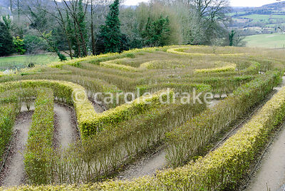 Anniversary maze in shape of 250 planted to mark the 250th birthday of the garden in 1998 in privet. Painswick Rococo Garden,...