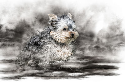 Art-Digital-Alain-Thimmesch-Chien-644