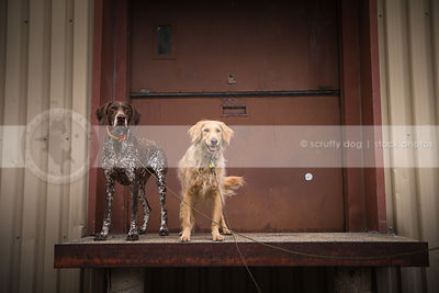 two dogs standing on platform of steel door at urban warehouse