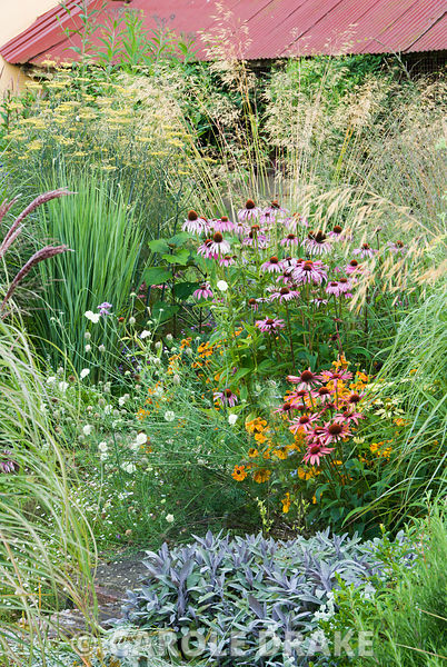 Planting in central circular beds include grasses Stipa gigantea and Panicum 'North Wind' with perennials such as purple sage...