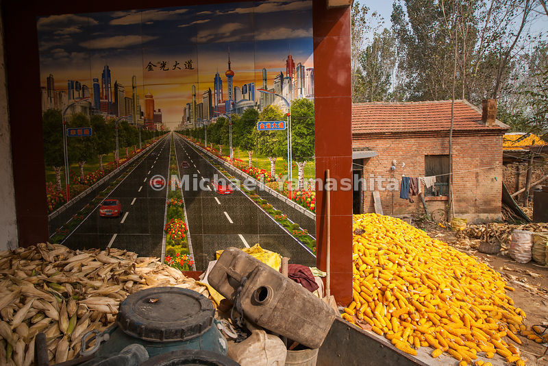 Shilizha Village corn harvest