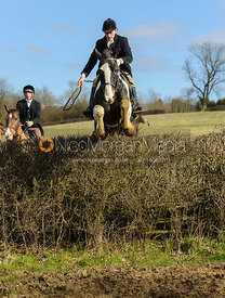 Adam Kirby jumping a big hedge at Ladywood - The Cottesmore Hunt at Ladywood