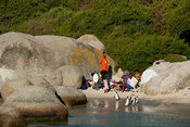 African penguins and people on Boulders Beach, Cape Peninsula, South Africa
