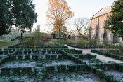 Knot garden planted with euonymus in The East Garden at the Bishop's Palace, Wells in which variously coloured dahlias from t...
