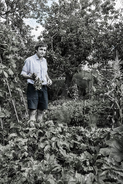 Fergus harvesting produce in the vegetable garden. Yews Farm, Martock, Somerset, UK