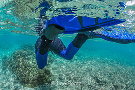 Snorkeler Swimming along Coral Reef off Big Island of Hawaii