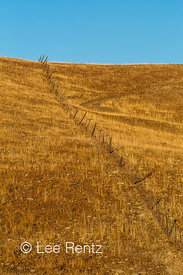 Fence Running through Golden California Hills