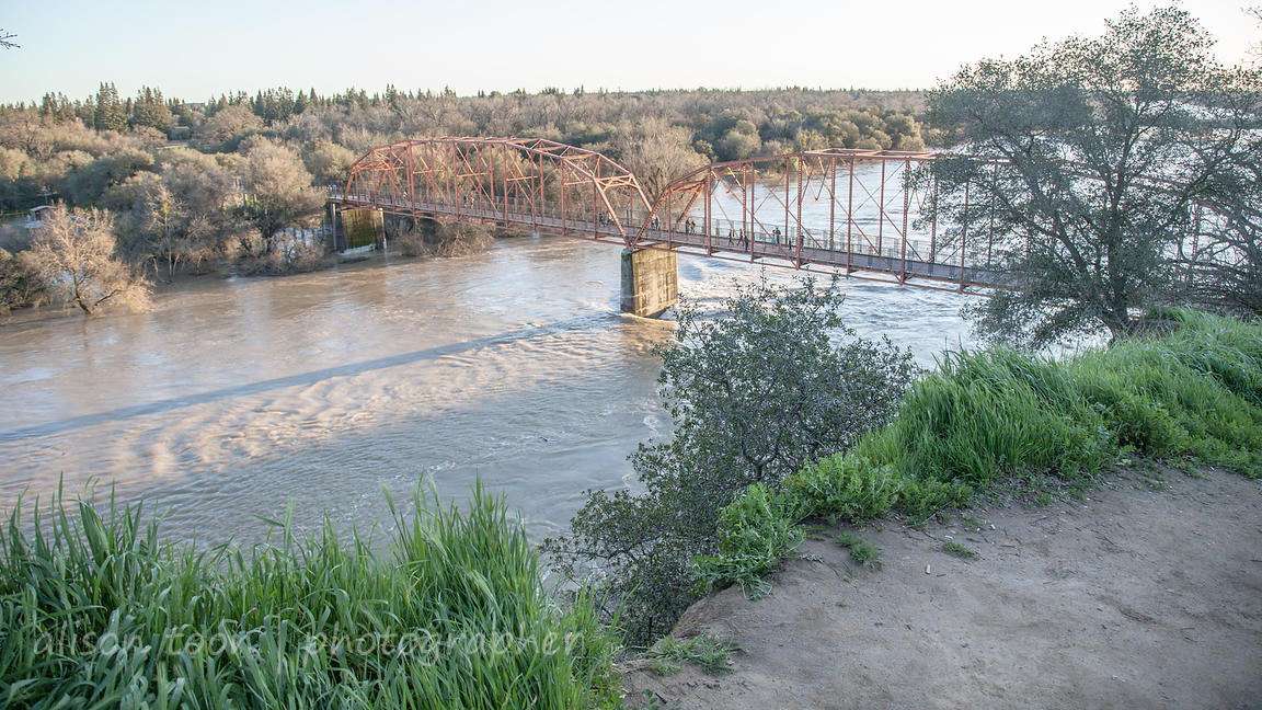 View of the red bridge, Fair Oaks, from the bluffs, with American River in flood