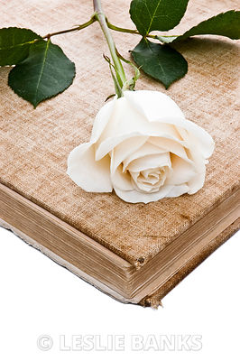 Rose on Vintage Book