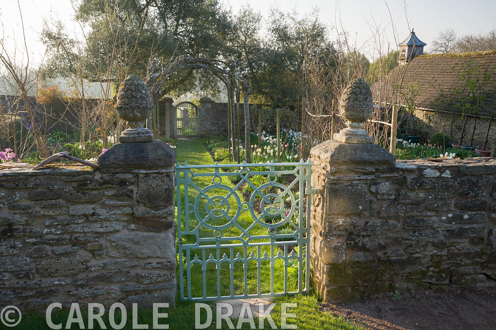 Gate into the cutting garden where a grass path leads beneath four trained whitebeams, Sorbus aria 'Lutescens', down towards ...