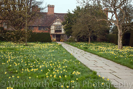 Narcissus pseudonarcissus naturalised at Great Dixter. © Jo Whitworth