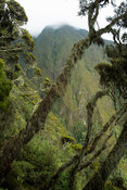 Mountain and forest view on the Mount Sabyinyo climb in the Virunga Mountains, Mgahinga Gorilla National Park, Uganda