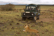 tourists watching a Lion (Panthero leo), Maasai Mara National Reserve, Kenya