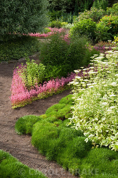 The Physic Garden features herb beds edged with London Pride, Saxifraga 'Clarence Elliot', and a clipped Pyrus salicifolia, w...