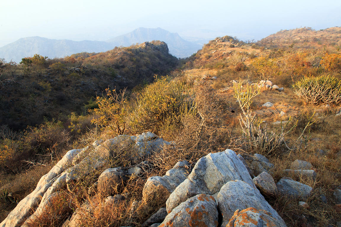 Beautiful native forest in the Aravali Range at the highest point in the entire Pushkar/Ajmer region, Leela Seori, Rajasthan,...