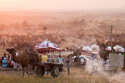 Tourists take a camel ride at the Pushkar camel fair, Pushkar, Rajasthan, India
