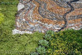 Decorative pebble paving edged with low growing alpine plants including: Sempervivum tectorum, Thymus citriodorus, Thymus 'Do...