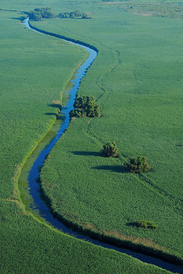 Aerial view of meandering river / waterway within the Danube delta rewilding area, Romania, June 2012