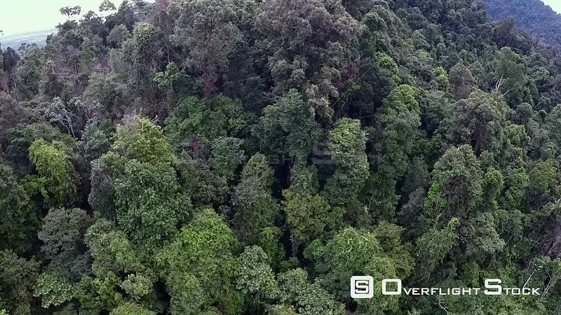 Aerial view of rainforest canopy, Suaq Balimbing, Kluet Swamps, Sumatra, Indonesia. 2015.