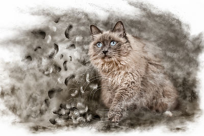Art-Digital-Alain-Thimmesch-Chat-50