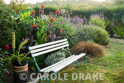 Bench in the wild garden surrounded by eucomis, cannas and clumps of carex, with pond byond. Crab Cottage, Shalfleet, Isle of...