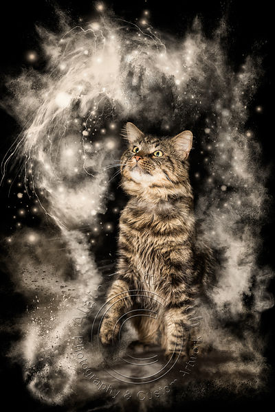 Art-Digital-Alain-Thimmesch-Chat-11